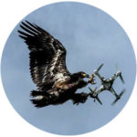 Prevent the drone from colliding with a bird image